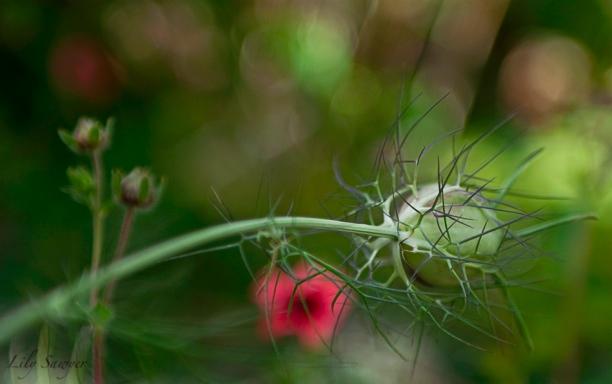 flower-4web.jpg