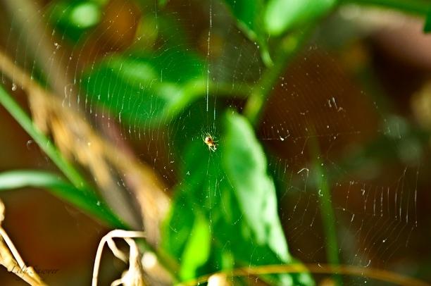 spider-web.jpg