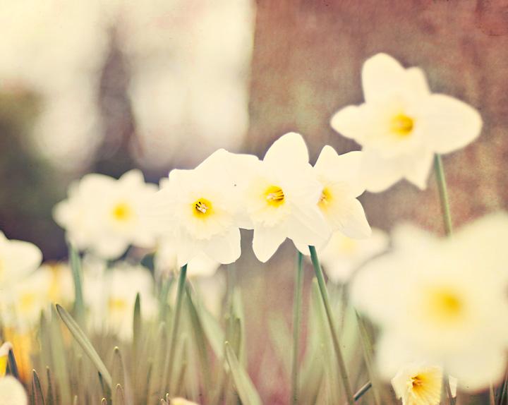 daffodils-blog.jpg