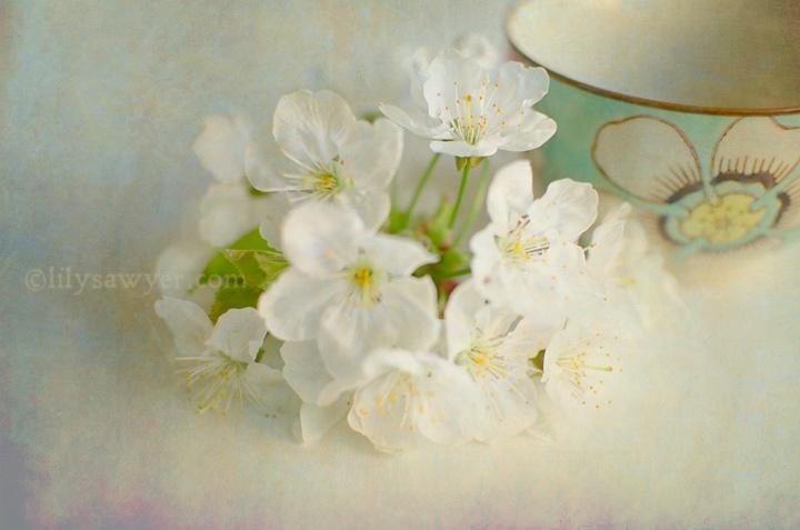 Cherry blossoms 8 blog