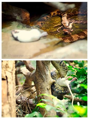 Snake mouse blog