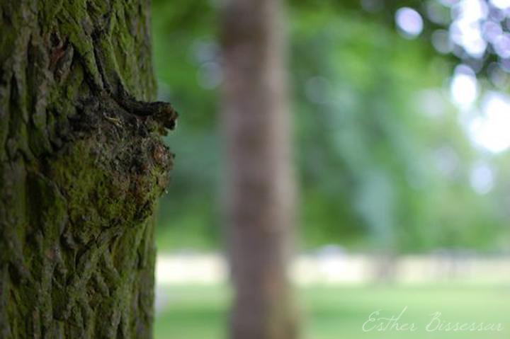 Tree 1 blog