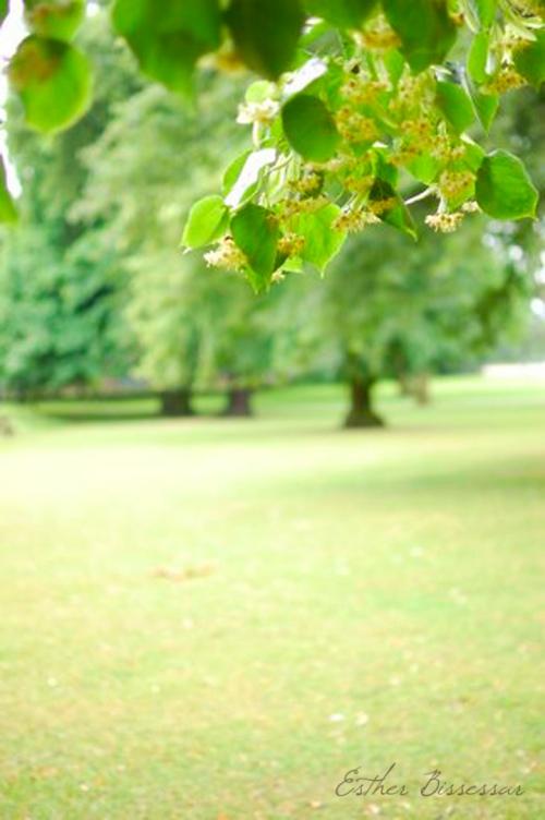 Tree blog