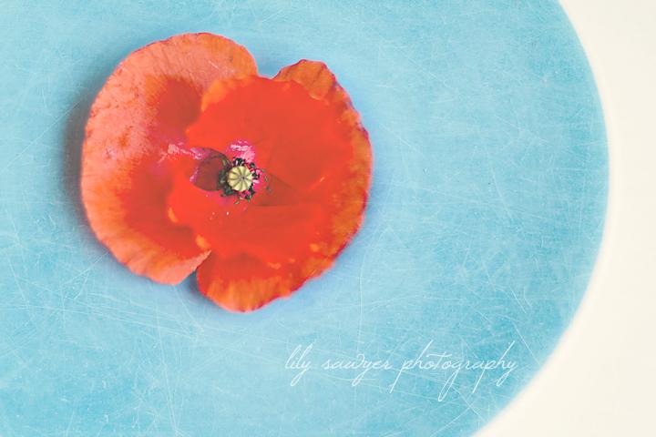 Poppy blog