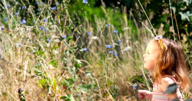 daisy-field-2.jpg
