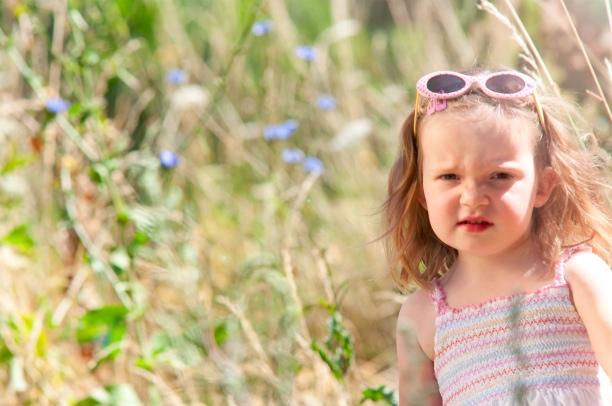daisy-field-3.jpg