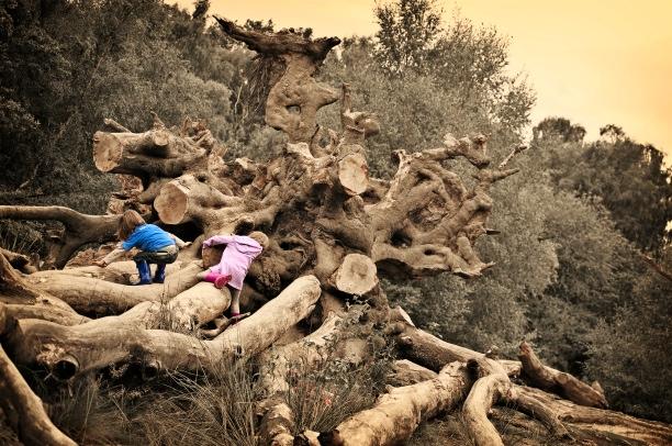 c-i-tree.jpg