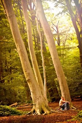 d-b-woods-1.jpg