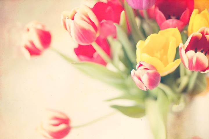 tulips-blog.jpg