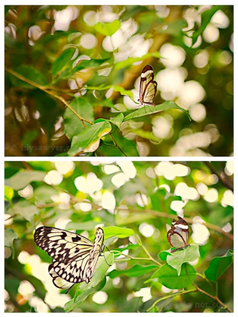 Butterfly blog
