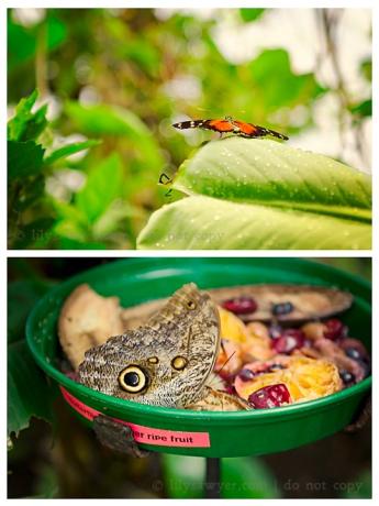 Moth blog