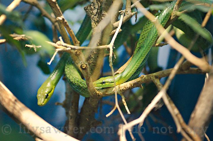Snakes blog