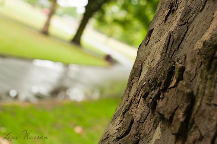 Tree1 blog