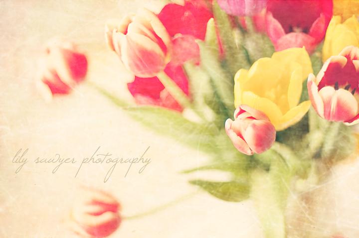 Tulips texture blog