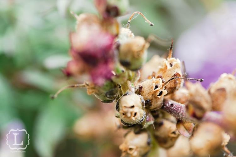 Dryflowermacro