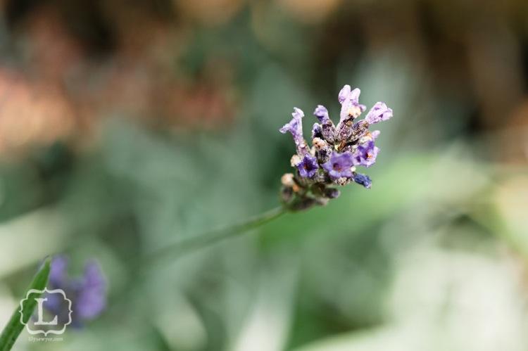 Purpleflowermacro