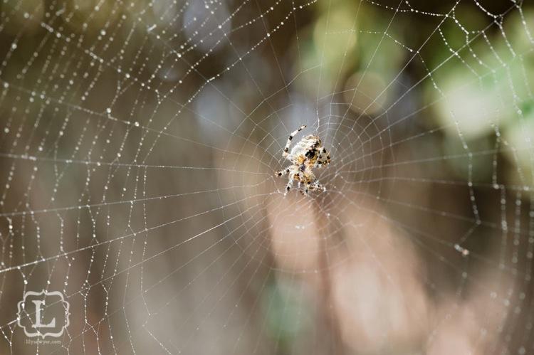 Spider1macro