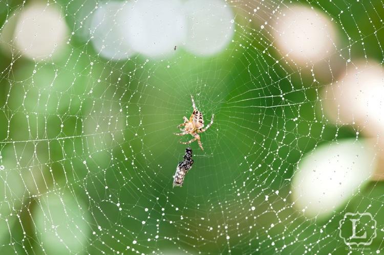 Spider3macro