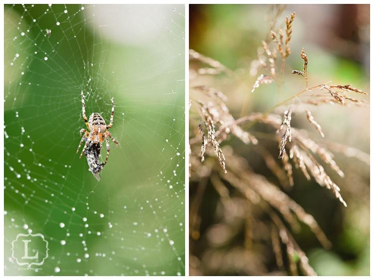 Spidermacro1